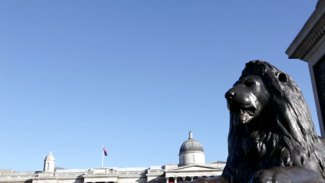 lion statue and nelson's column, london - nelson's column stock videos and b-roll footage