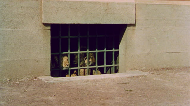 vidéos et rushes de lions being released into arena in ancient rome / quo vadis (1951) - civilisation ancienne