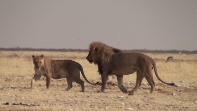 Menschen videos bei paarung ❱❱Paarung bei