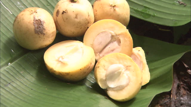 stockvideo's en b-roll-footage met lipasu (baccaurea lanceolata, family euphorbieace)  in malaysia   - middelgrote groep dingen