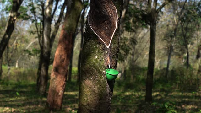 liquid rubber drop from rubber tree - collection stock videos & royalty-free footage
