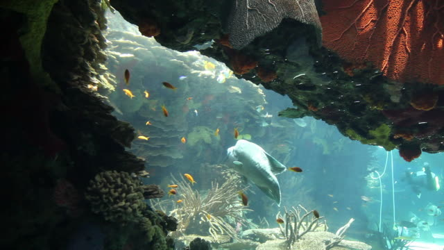 Lisbon, Park of the Nations (Parque das Nacoes), the oceanarium