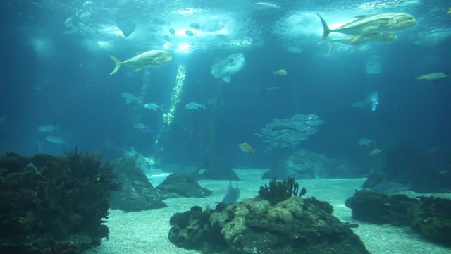 lisbon, park of the nations (parque das nacoes), the oceanarium  - the natural world stock videos & royalty-free footage