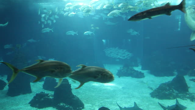 Lisbon, Park of the Nations (Parque das Nacoes), the oceanarium