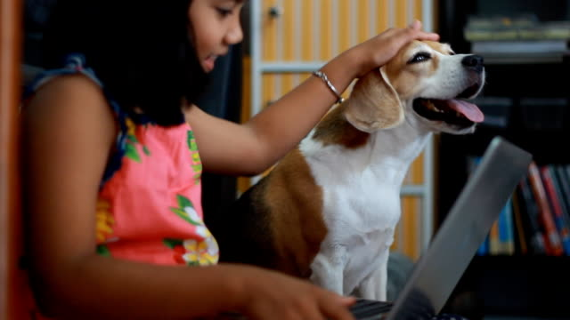 little african girl using her tablet and her beagle dog looking on tablet - beagle stock videos & royalty-free footage