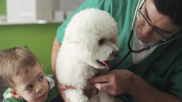 little boy and his dog at vet - havanese stock videos and b-roll footage