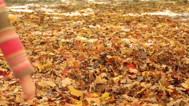 ms pan little boy and little girl playing in fallen autumn leaves / toronto, ontario, canada - kelly mason videos stock videos & royalty-free footage