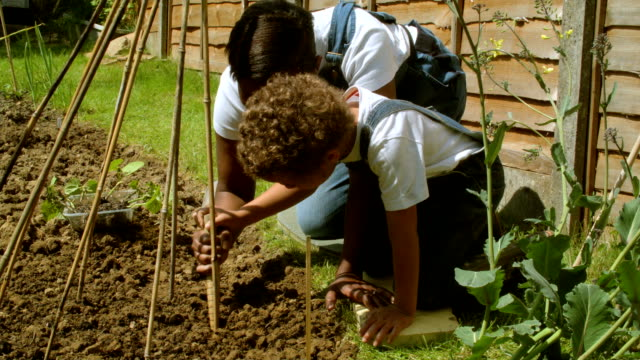 hd: little boy and mother planting beans in the ground - potting stock videos and b-roll footage