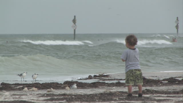 little boy and the ocean - medium group of animals stock videos & royalty-free footage