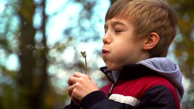 Little boy blowing dandelion flower