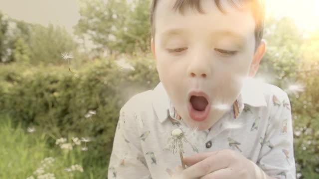 little boy blowing the seeds off a dandelion - dandelion stock videos & royalty-free footage