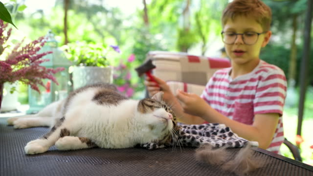little boy brushing his cat in the garden - stroking stock videos & royalty-free footage