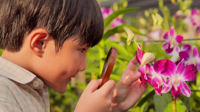 vídeos de stock e filmes b-roll de little boy child exploring nature in a garden with a magnifying glass looking for insects.eduction,children,people,technology,springtime,science,summer,fun concept. - lupa