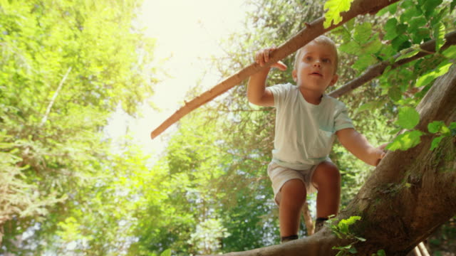 little boy climbing up a broken tree trunk in the sunny forest - solo un bambino maschio video stock e b–roll