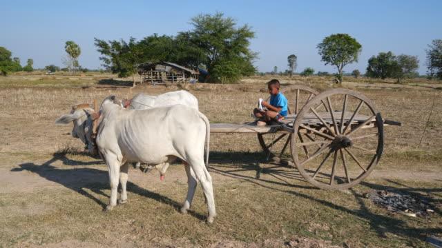little boy driving ox cart - plowed field stock videos & royalty-free footage