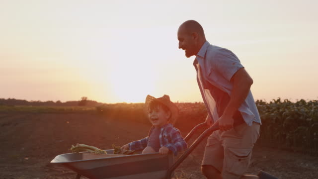 slo mo little boy enjoys a ride in a wheelbarrow in the middle of a field - pushing stock videos & royalty-free footage