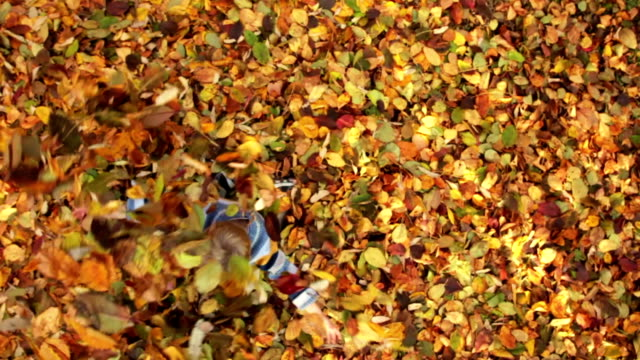 CRANE SHOT: Little boy having fun with autumn leaves