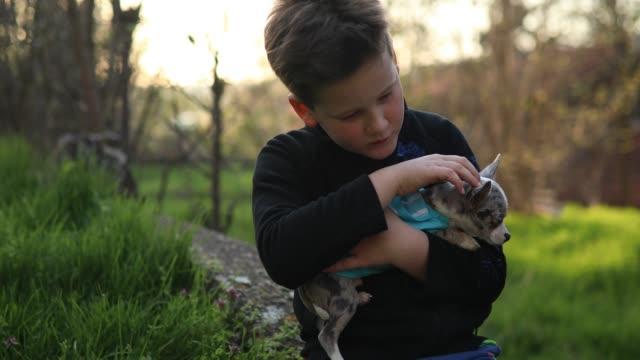 Kleiner Junge seinen Chihuahua Hund festhalten