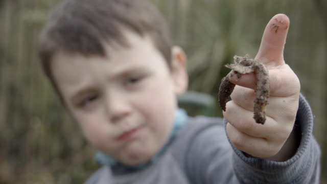 little boy holding up a garden worm when digging garden - worm stock videos and b-roll footage