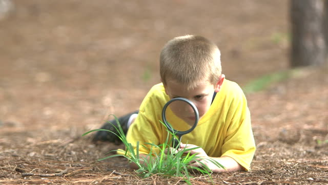 vídeos de stock e filmes b-roll de little boy in park examining plant with magnifying glass - 4 5 anos