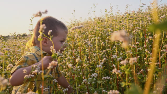 SLO MO Little boy in the buckwheat field
