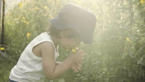 vidéos et rushes de petites fleurs de cueillette de garçon - jardiner