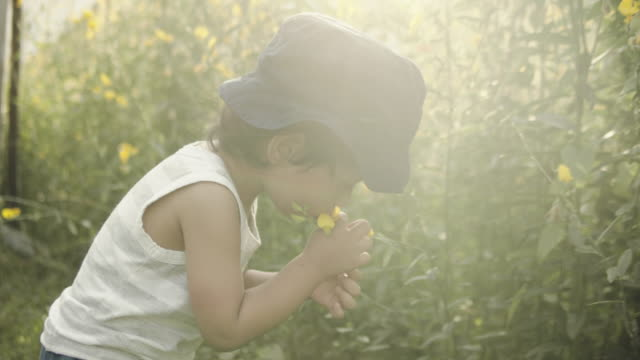 little boy picking flowers - gardening stock videos & royalty-free footage