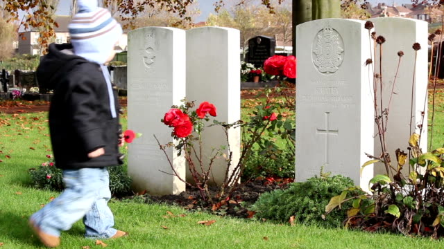 little boy places poppy on wartime world war 2 grave - armistice day stock videos and b-roll footage