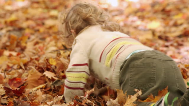 ms pan  little boy playing in pile of fallen leaves / toronto, ontario, canada - kelly mason videos stock videos & royalty-free footage