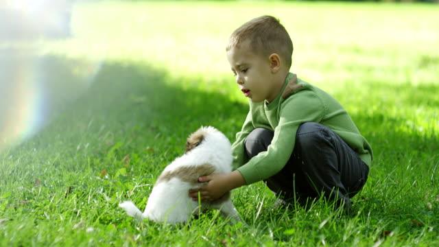 vidéos et rushes de petit garçon jouant avec le chiot dans le parc - herbe