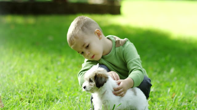 Little boy playing with puppy in park