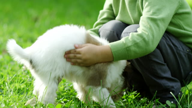 little boy playing with puppy in park - hoozone stock videos and b-roll footage