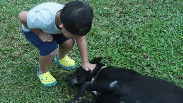 小さな男の子が犬と遊ぶ。 - 秋田県点の映像素材/bロール