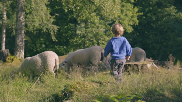 Little Boy Plays With Sheep In Nature