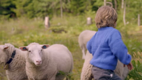 little boy plays with sheep in nature - farm stock videos & royalty-free footage