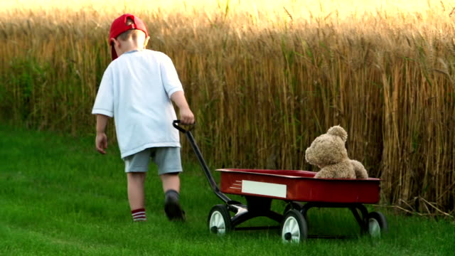 little boy pulls a red wagon with teddy bear - cap stock videos & royalty-free footage