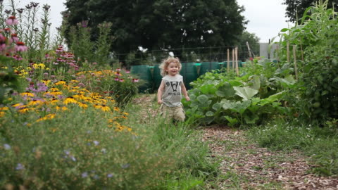ms pov little boy running in garden / tornto, ontario, canada - kelly mason videos stock videos & royalty-free footage