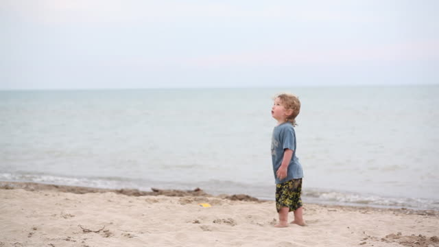 ms pan little boy standing on beach and watching flying birds in sky with little girl diggin hole of sand on beach / toronto, ontario, canada - kelly mason videos 個影片檔及 b 捲影像
