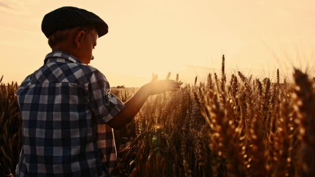 vídeos y material grabado en eventos de stock de little boy touching de san luis obispo missouri orejas de trigo - imagen virada