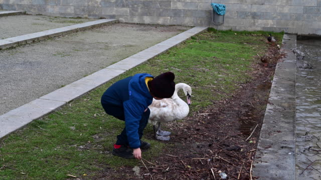little boy try to caress a swan very carefully and leaves very cheerful on the shore of a lake. germany in a winter day. - ウィンターコート点の映像素材/bロール