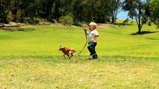 Little boy walks a dog in the grass