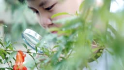 Little boy with a loupe looking at flowers