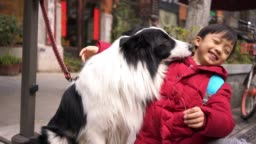Little boy with  Border collie