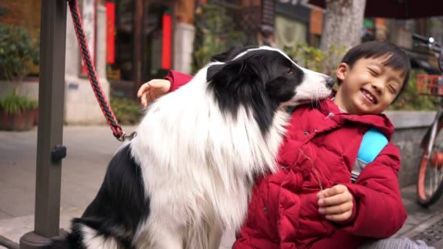 little boy with  border collie - malamute stock videos and b-roll footage