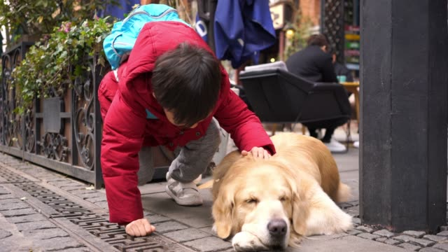 little boy with golden retriever - malamute stock videos and b-roll footage