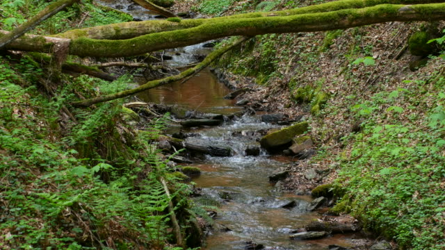 little brook and deadwood in woodland in spring - moss stock videos & royalty-free footage