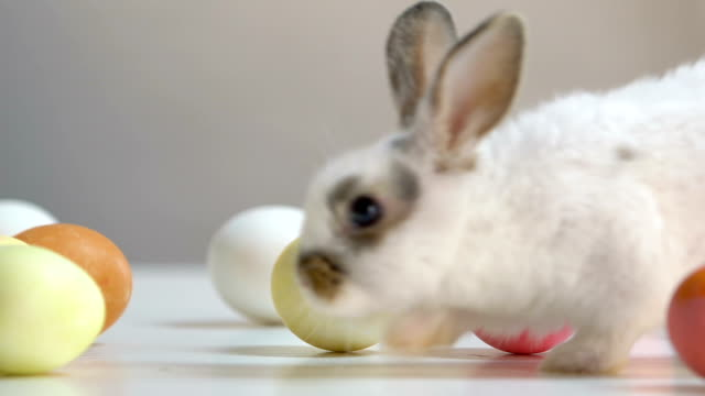 Little bunny jumping between colorful dyed eggs, Easter symbol, traditions
