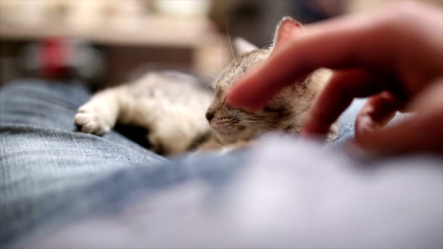 vídeos de stock e filmes b-roll de little cat enjoying cuddling with a man - amimar