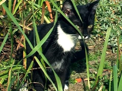 vídeos y material grabado en eventos de stock de little cat - menos de diez segundos