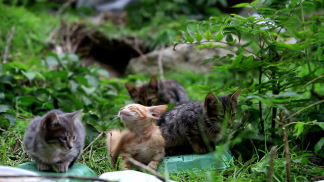 little cats in nature - large group of objects stock videos & royalty-free footage
